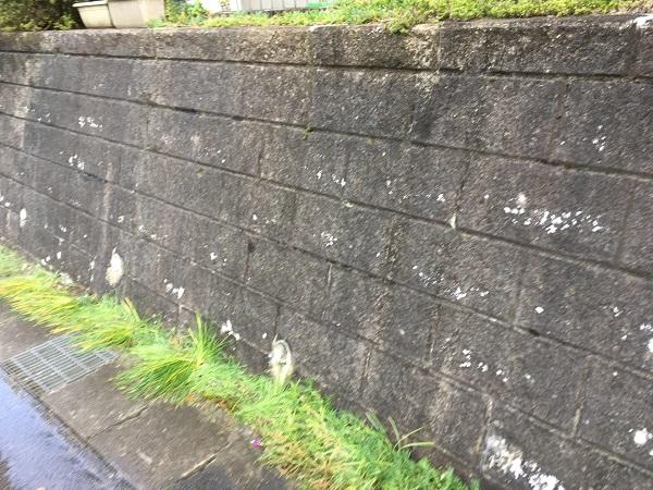 東京都世田谷区 屋根塗装 雨の日の高圧洗浄作業 (5)