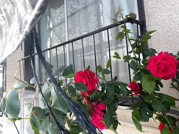 東京都世田谷区 K様邸 屋根塗装・付帯部塗装・劣化補修 窓手摺りの塗装 錆びの怖さ (3)